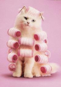 cat_in_rollers